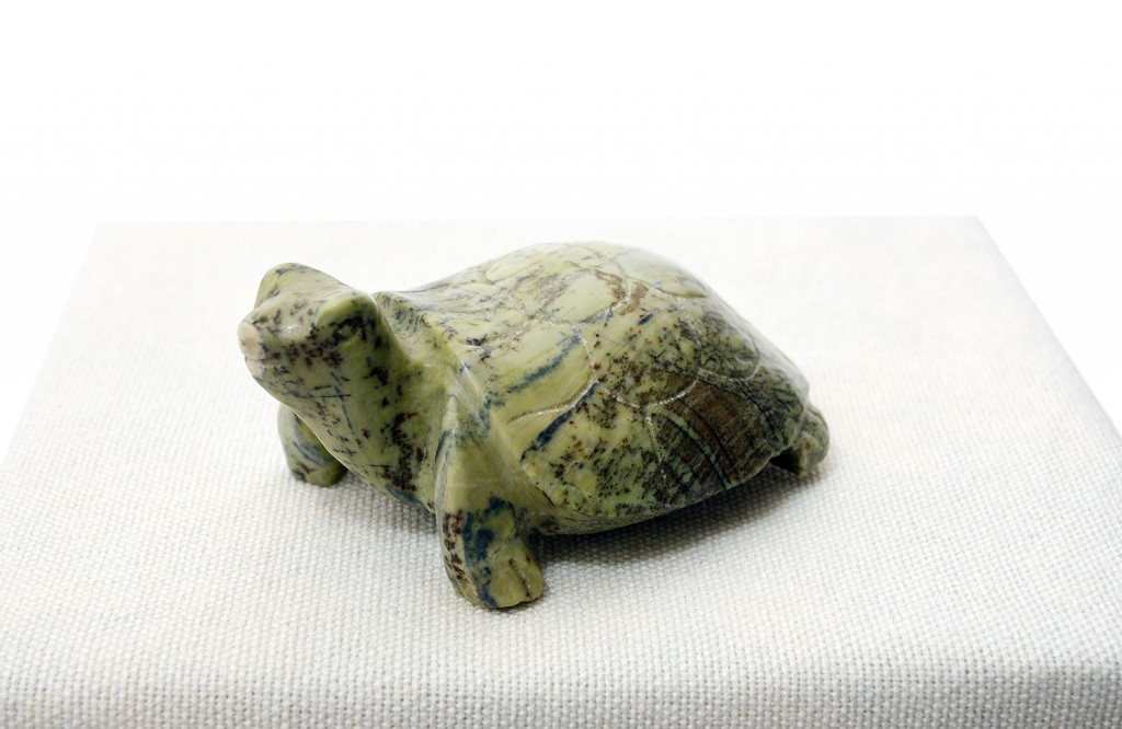 Tortoise Mv6133